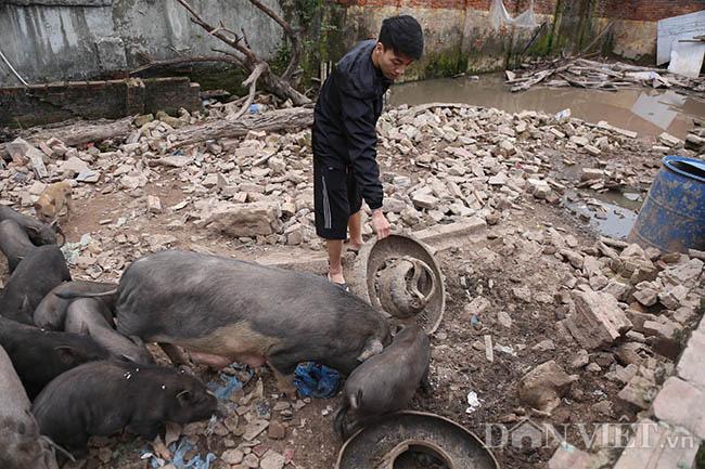 Lạ: Nuôi đàn lợn rừng giữa quận Đống Đa, thủ đô Hà Nội - Ảnh 10.