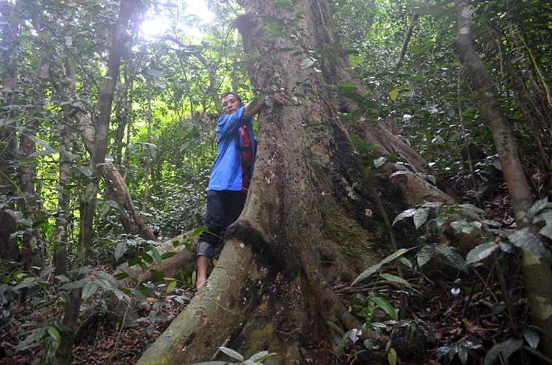 Kỳ bí khu rừng thiêng 300ha lâm tặc không dám chặt 1 cây - Ảnh 2.