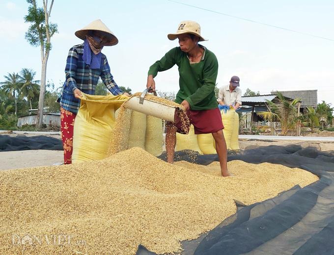 Cà Mau: Kênh nứt nẻ phải thuê xe máy chở lúa đi bán, dân méo mặt - Ảnh 4.