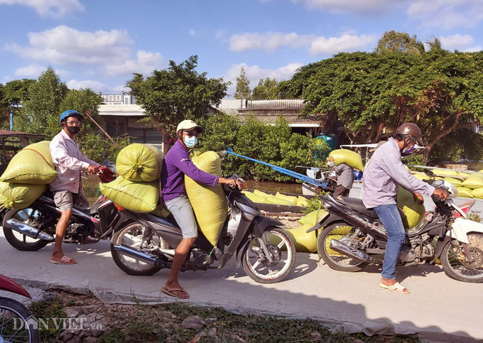 Cà Mau: Kênh nứt nẻ phải thuê xe máy chở lúa đi bán, dân méo mặt - Ảnh 1.