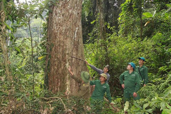 Sơn La: Phát huy tốt vai trò cơ sở trong việc bảo vệ rừng - Ảnh 2.