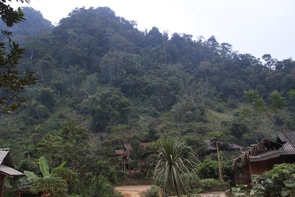 Sơn La: Phát huy tốt vai trò cơ sở trong việc bảo vệ rừng - Ảnh 4.