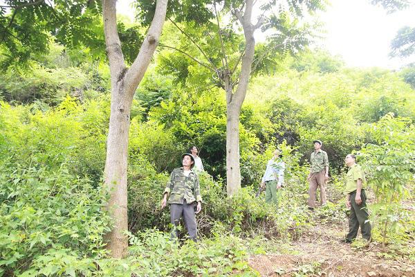 Sơn La: Phát huy tốt vai trò nhân dân trong việc bảo vệ rừng - Ảnh 6.