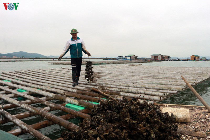 Tìm giải pháp tiêu thụ hải sản trong mùa dịch Covid-19 - Ảnh 1.