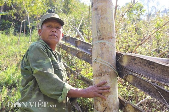 """Đi tìm loài tre khổng lồ ví như """"báu vật"""" trên đỉnh núi thiêng Sơn La - Ảnh 5."""