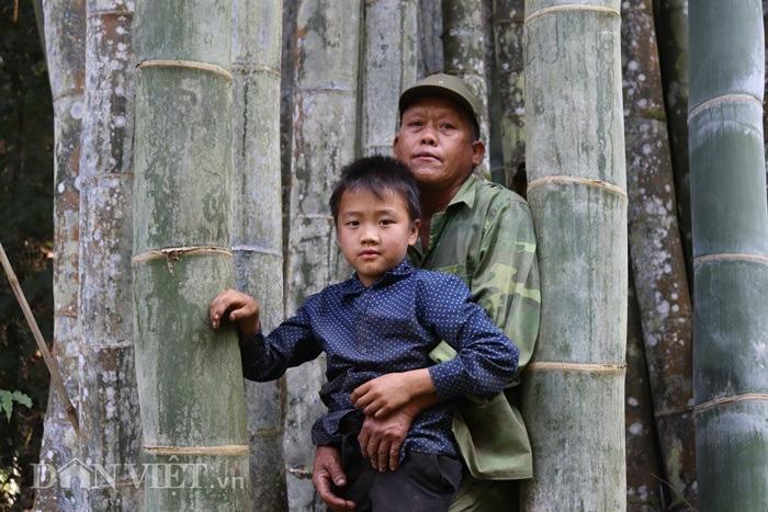 """Đi tìm loài tre khổng lồ ví như """"báu vật"""" trên đỉnh núi thiêng Sơn La - Ảnh 2."""