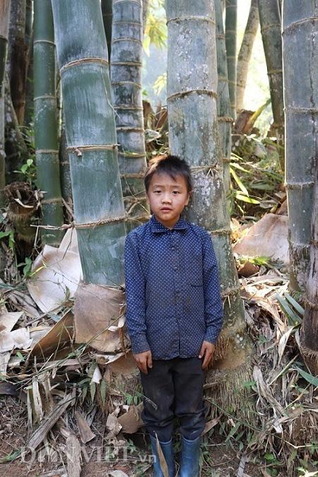 """Đi tìm loài tre khổng lồ ví như """"báu vật"""" trên đỉnh núi thiêng Sơn La - Ảnh 8."""