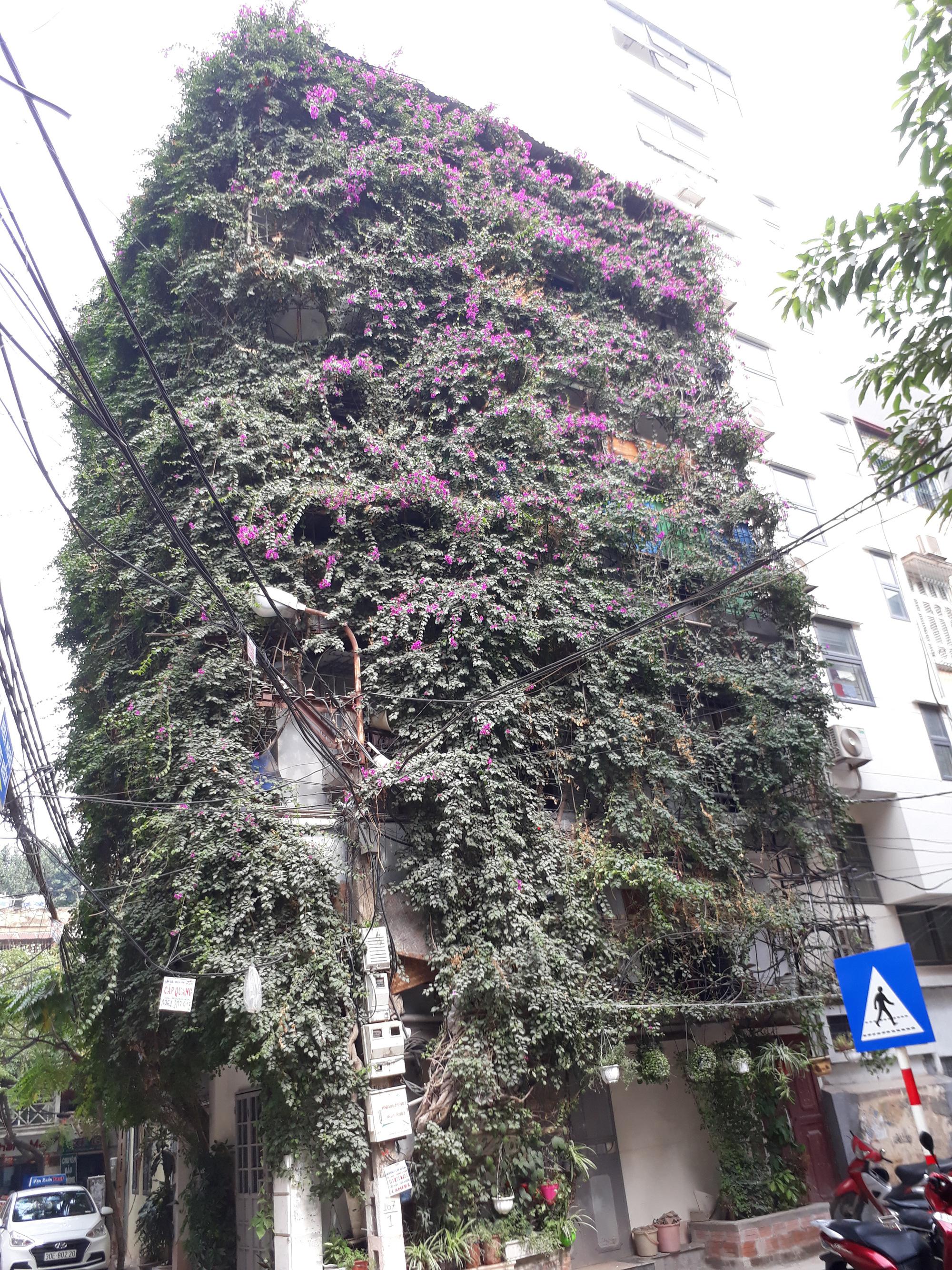 Nhà cây 5 tầng phủ kín hoa giấy ở Hà Nội, ai đi qua cũng dừng lại ngắm - Ảnh 14.
