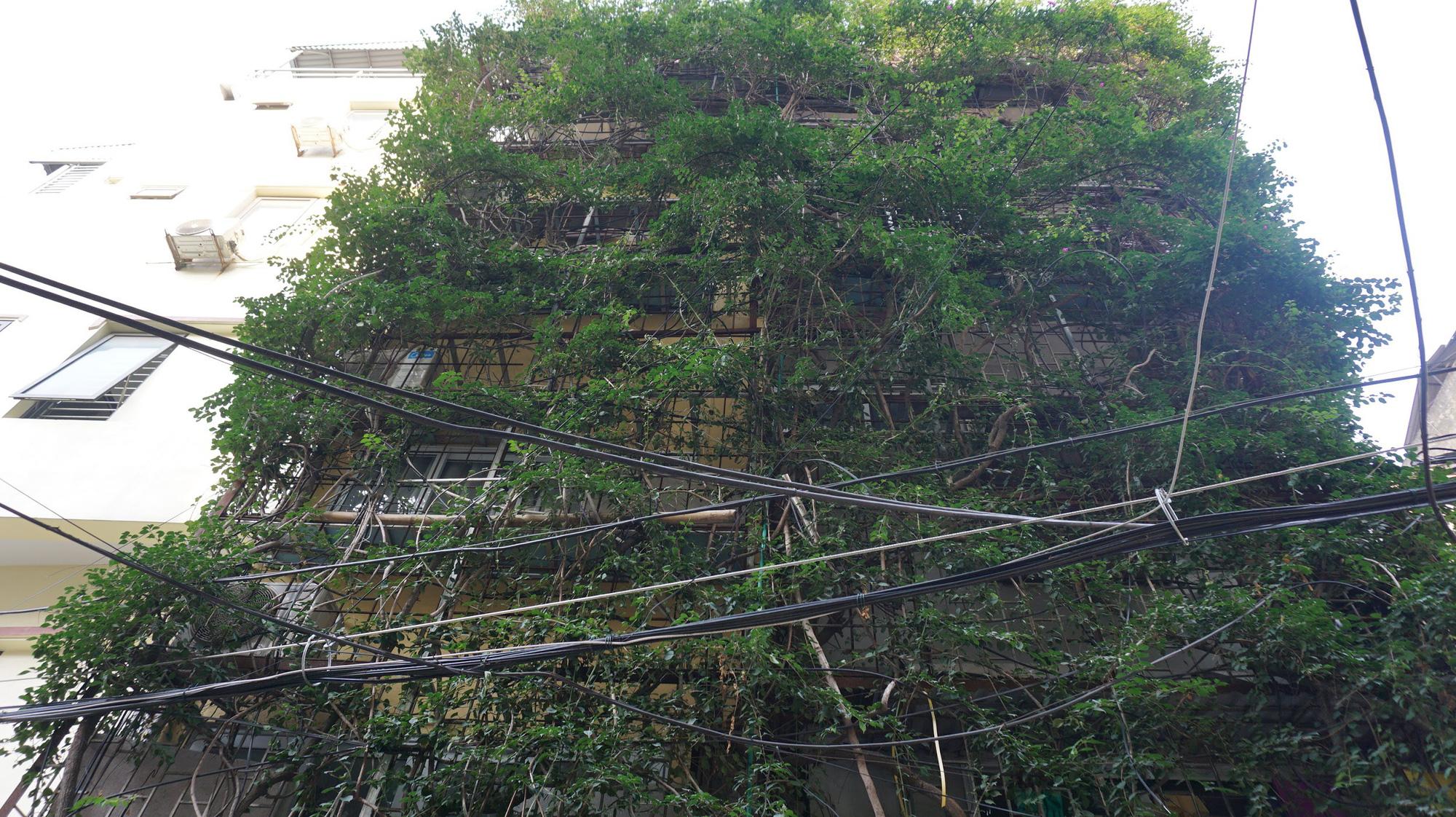 Nhà cây 5 tầng phủ kín hoa giấy ở Hà Nội, ai đi qua cũng dừng lại ngắm - Ảnh 3.