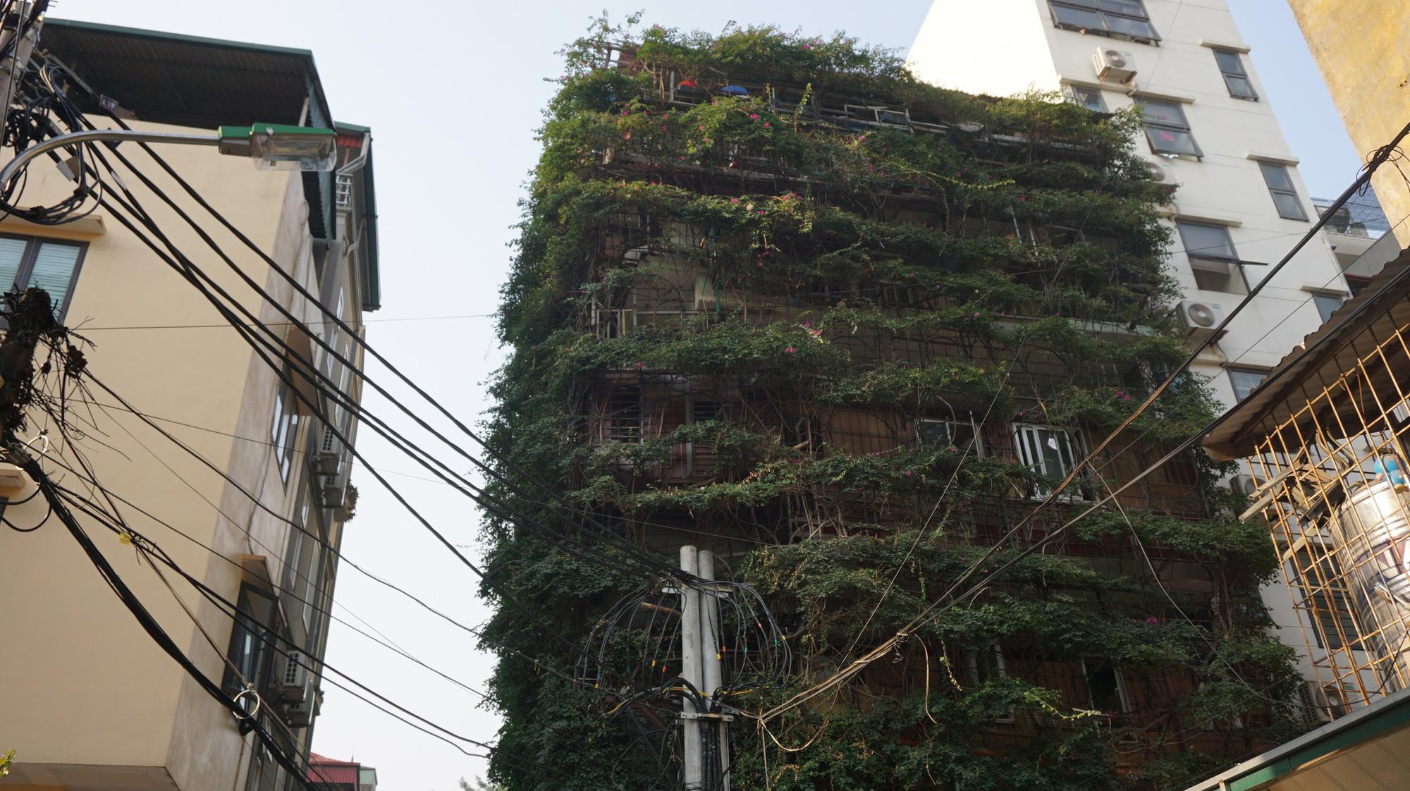 Nhà cây 5 tầng phủ kín hoa giấy ở Hà Nội, ai đi qua cũng dừng lại ngắm - Ảnh 4.