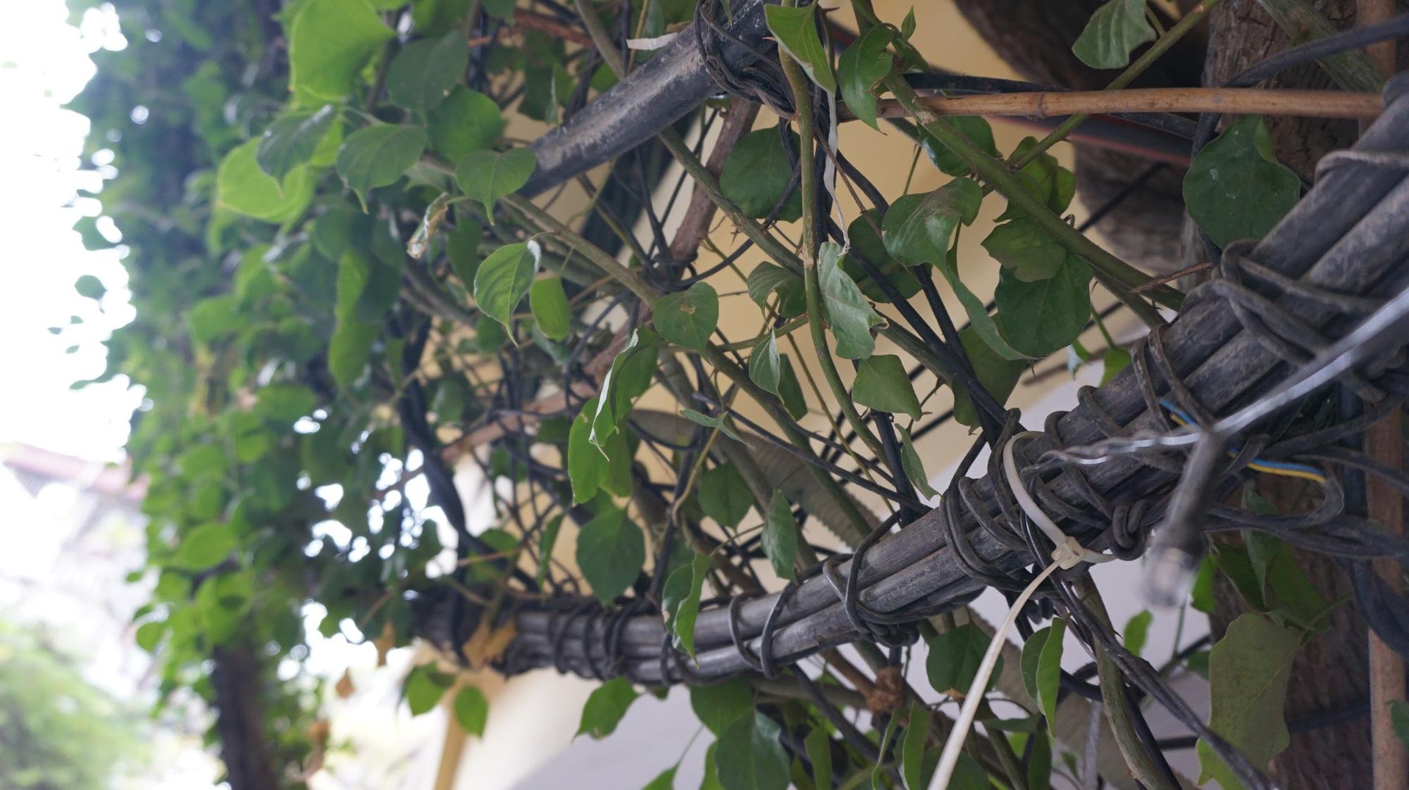 Nhà cây 5 tầng phủ kín hoa giấy ở Hà Nội, ai đi qua cũng dừng lại ngắm - Ảnh 6.