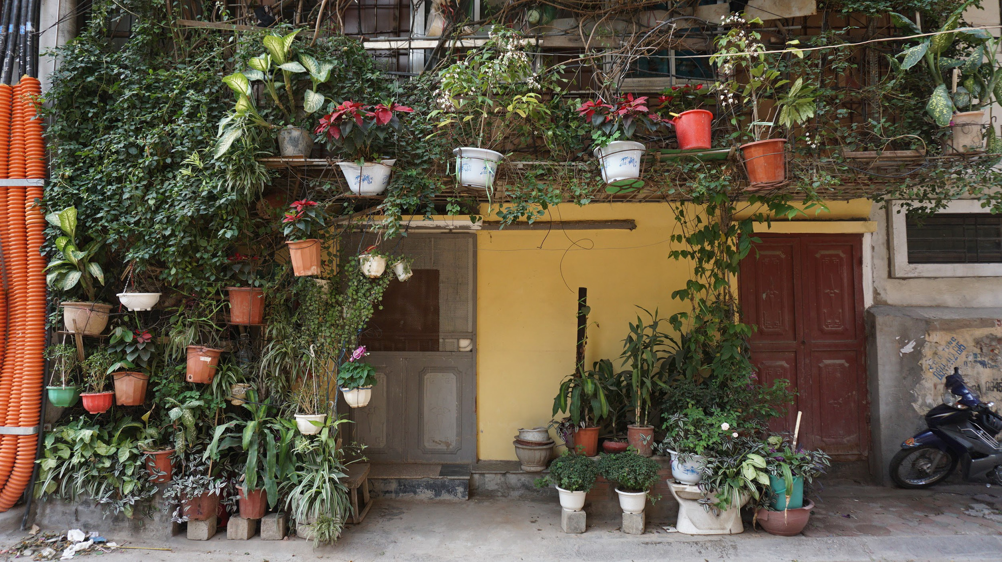 Nhà cây 5 tầng phủ kín hoa giấy ở Hà Nội, ai đi qua cũng dừng lại ngắm - Ảnh 8.