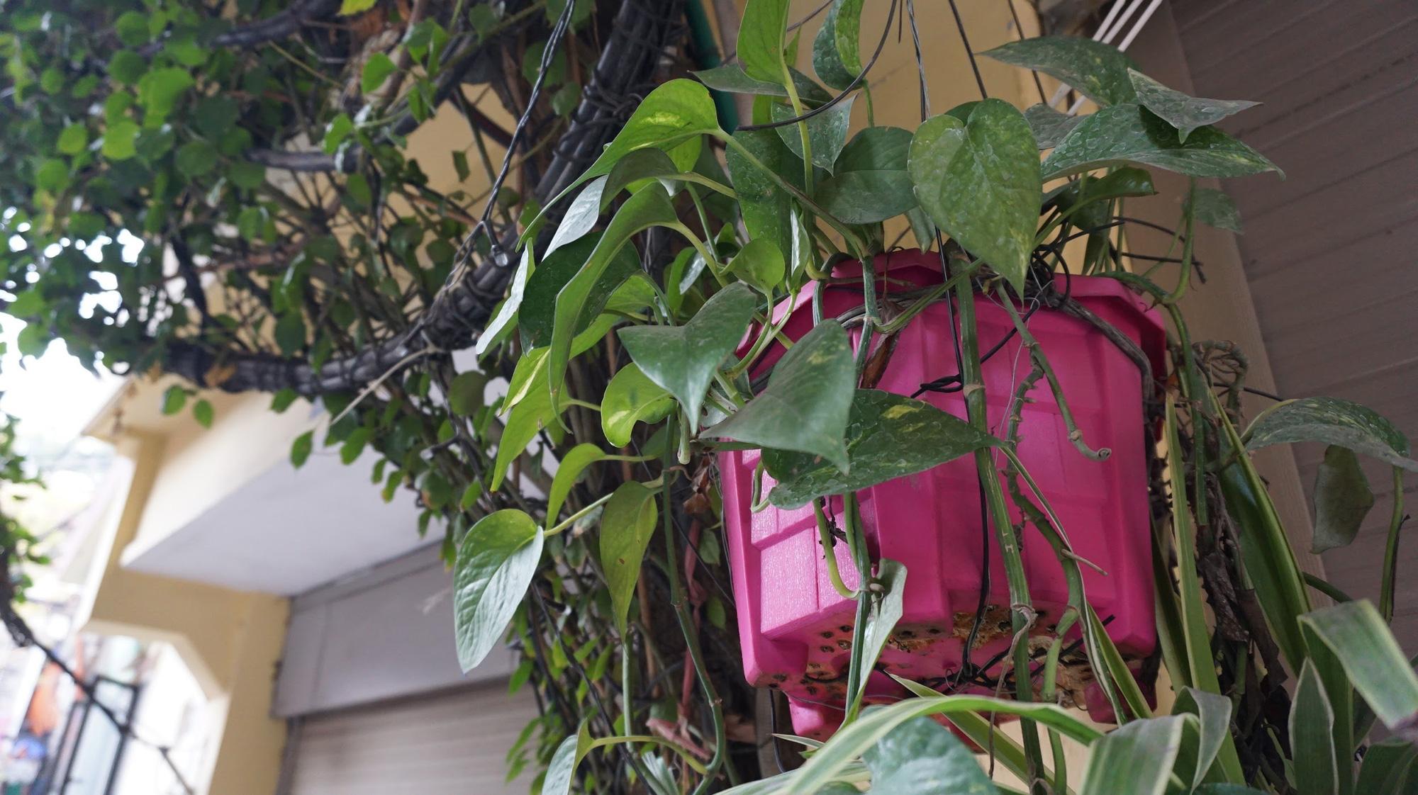 Nhà cây 5 tầng phủ kín hoa giấy ở Hà Nội, ai đi qua cũng dừng lại ngắm - Ảnh 9.