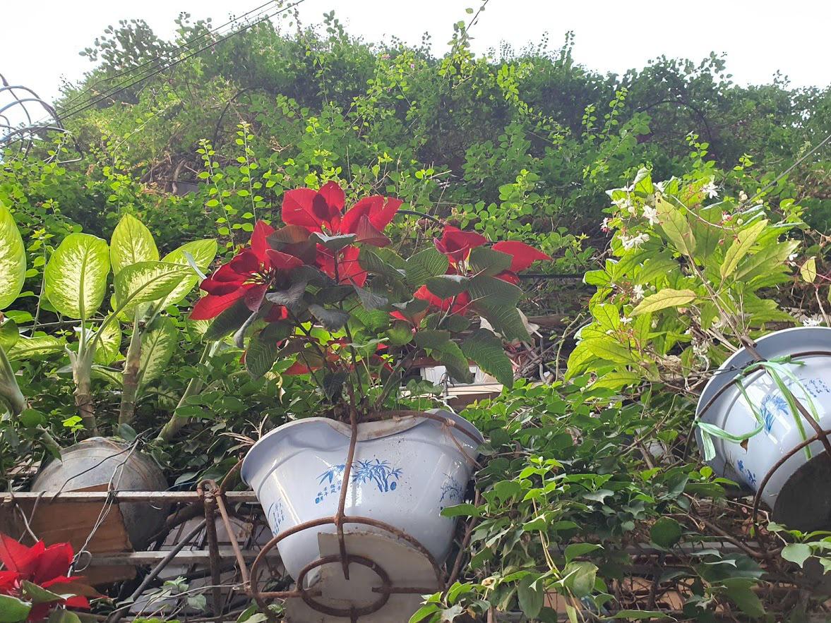 Nhà cây 5 tầng phủ kín hoa giấy ở Hà Nội, ai đi qua cũng dừng lại ngắm - Ảnh 10.