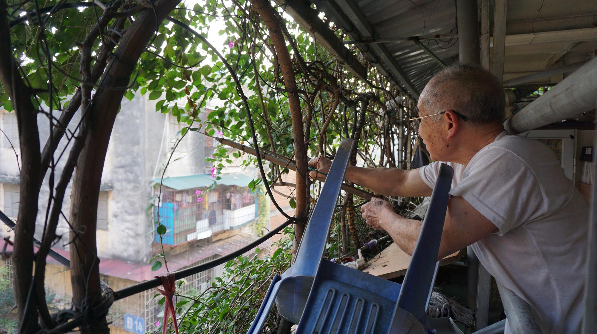 Nhà cây 5 tầng phủ kín hoa giấy ở Hà Nội, ai đi qua cũng dừng lại ngắm - Ảnh 11.