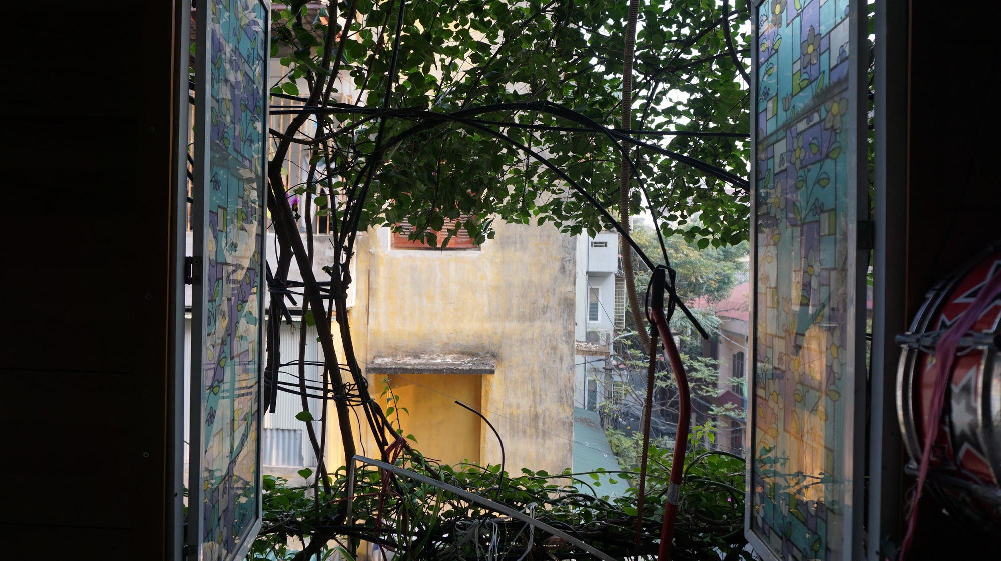 Nhà cây 5 tầng phủ kín hoa giấy ở Hà Nội, ai đi qua cũng dừng lại ngắm - Ảnh 13.
