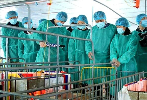 Lạng Sơn: Quan tâm đầu tư phát triển các mô hình HTX nông nghiệp, chăn nuôi  - Ảnh 1.