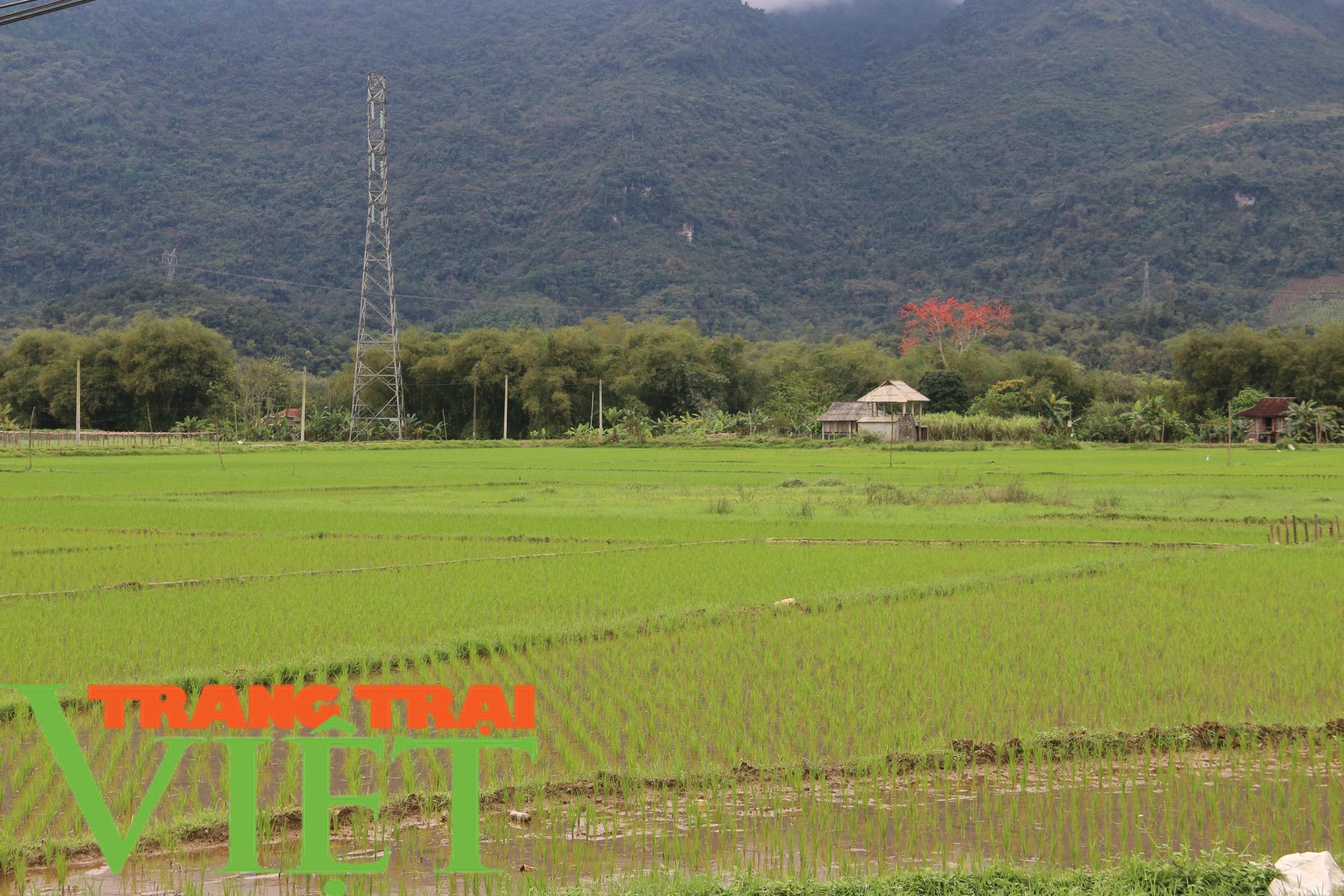 Hoà Bình: Đẩy mạnh công tác xây dựng nông thôn mới - Ảnh 6.