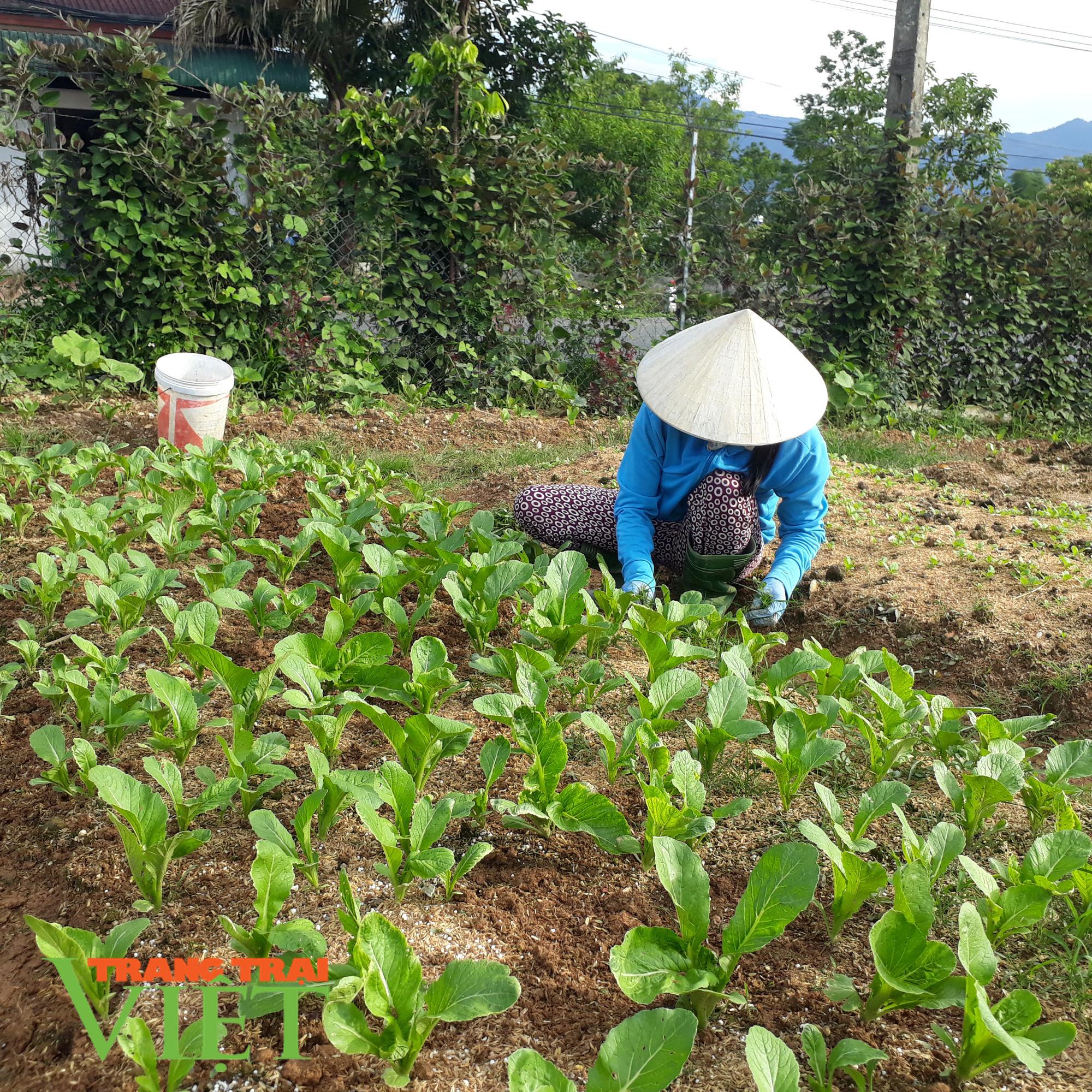 Lại Châu: Hiệu quả từ đề án phát triển sản xuất nông nghiệp hàng hóa - Ảnh 4.