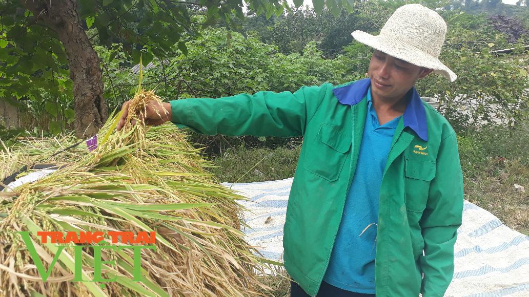 Lại Châu: Hiệu quả từ đề án phát triển sản xuất nông nghiệp hàng hóa - Ảnh 1.
