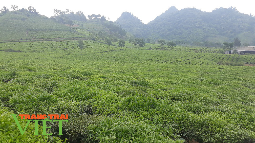 Lại Châu: Hiệu quả từ đề án phát triển sản xuất nông nghiệp hàng hóa - Ảnh 5.