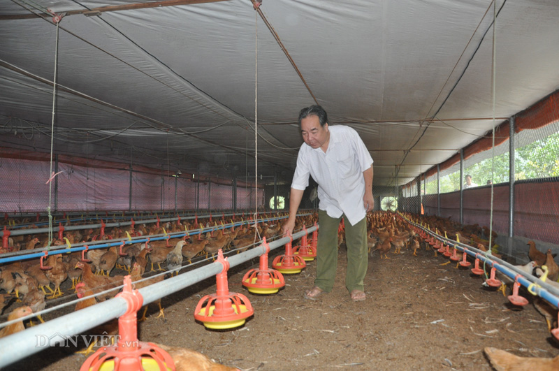 Giá gia cầm hôm nay 26/3: Thủ tướng ký chỉ thị khẩn bảo vệ người chăn nuôi - Ảnh 1.