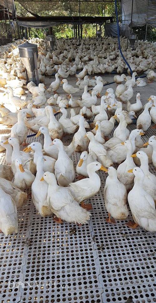 Giá gia cầm hôm nay 26/3: Thủ tướng ký chỉ thị khẩn bảo vệ người chăn nuôi - Ảnh 2.