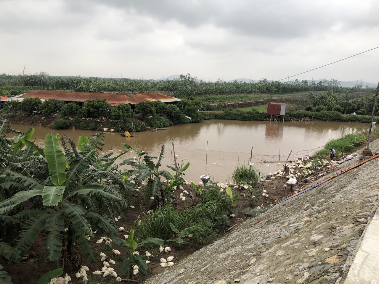"""Tỉnh Bắc Ninh phản hồi sau loạt bài """"Sân golf Thuận Thành""""  - Ảnh 5."""