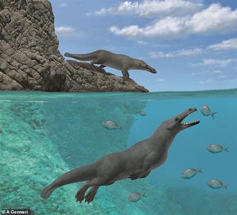 Loài cá to bự này từng đi bộ bằng 4 chân - Ảnh 1.