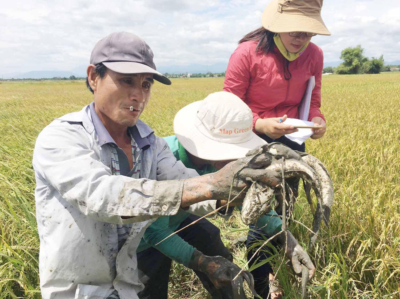Nông nghiệp hữu cơ Quảng Trị- cho đất nở hoa: DN đồng hành cùng nông dân - Ảnh 3.