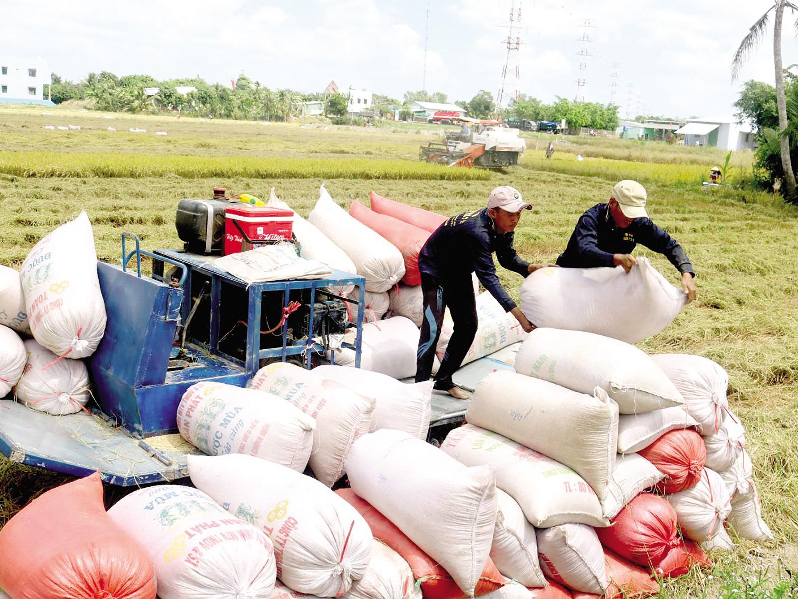 Phó Chủ tịch VFA: Trung Quốc mua gạo nếp, không mua gạo để tích trữ - Ảnh 2.