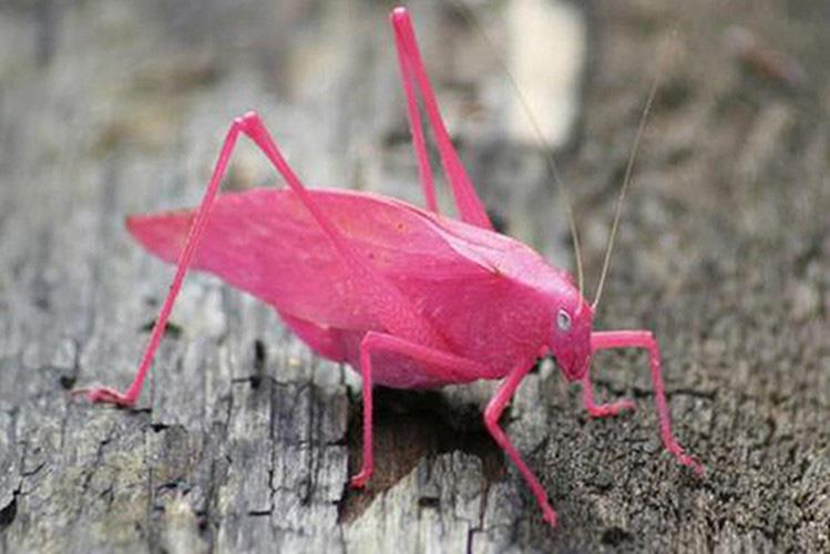 Những loài vật có màu sắc độc lạ mà bạn không ngờ tới - Ảnh 1.