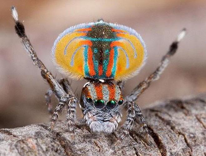 Những loài vật có màu sắc độc lạ mà bạn không ngờ tới - Ảnh 11.