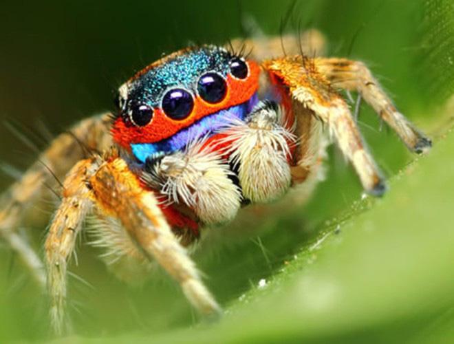 Những loài vật có màu sắc độc lạ mà bạn không ngờ tới - Ảnh 12.