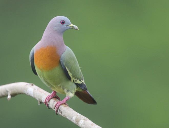 Những loài vật có màu sắc độc lạ mà bạn không ngờ tới - Ảnh 17.