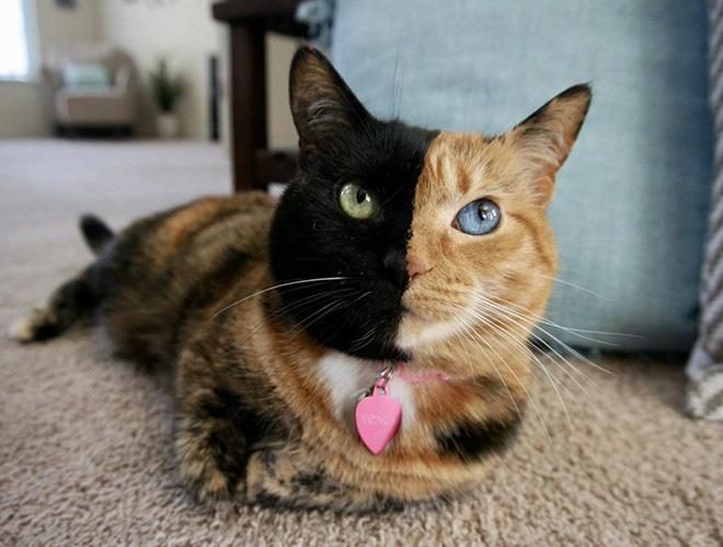 Những loài vật có màu sắc độc lạ mà bạn không ngờ tới - Ảnh 6.