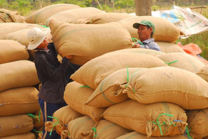 Thị trường lúa gạo sôi động trở lại - Ảnh 3.