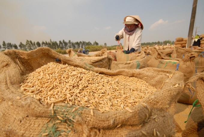Thị trường lúa gạo sôi động trở lại - Ảnh 4.