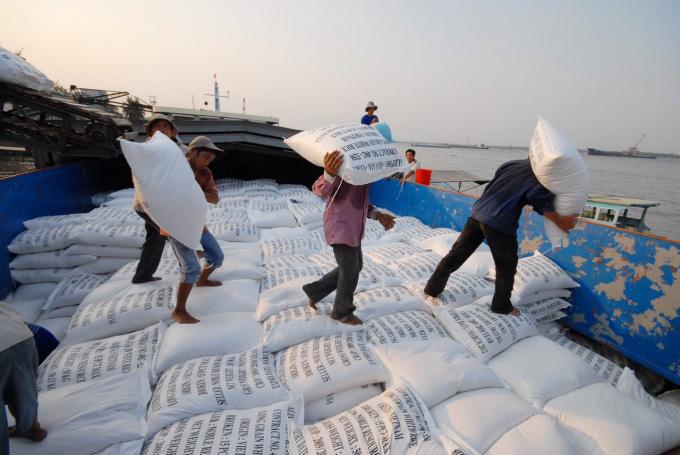 Thị trường lúa gạo sôi động trở lại - Ảnh 1.