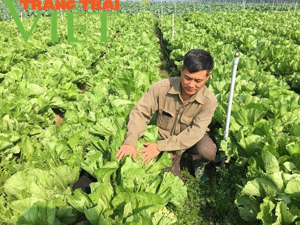 Mộc Châu ứng dụng công nghệ cao vào sản xuất nông nghiệp - Ảnh 3.