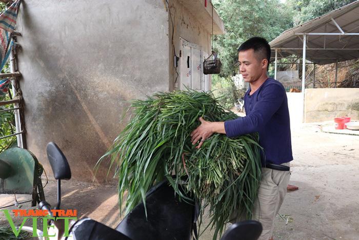 Đồng vốn Agribank tiếp sức, nông dân Phù Yên trở thành triệu phú - Ảnh 2.