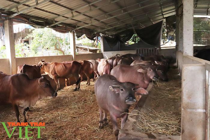 Đồng vốn Agribank tiếp sức, nông dân Phù Yên trở thành triệu phú - Ảnh 4.