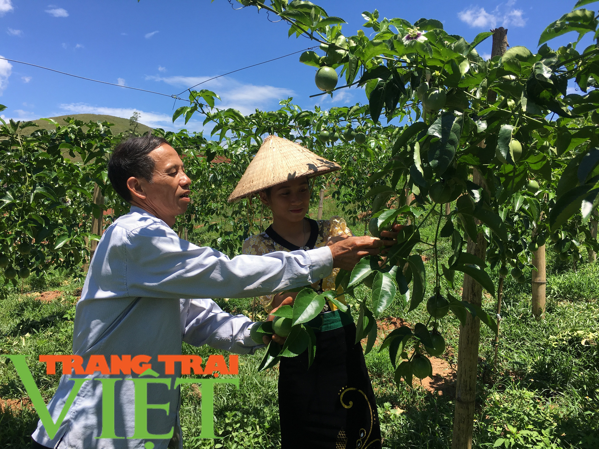 Mộc Châu ứng dụng công nghệ cao vào sản xuất nông nghiệp - Ảnh 4.