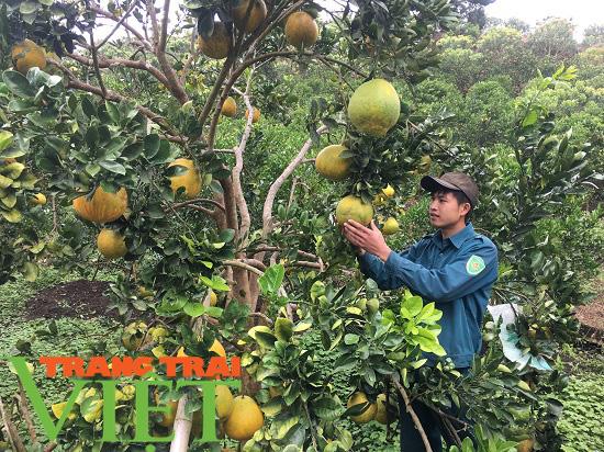 Mộc Châu ứng dụng công nghệ cao vào sản xuất nông nghiệp - Ảnh 1.