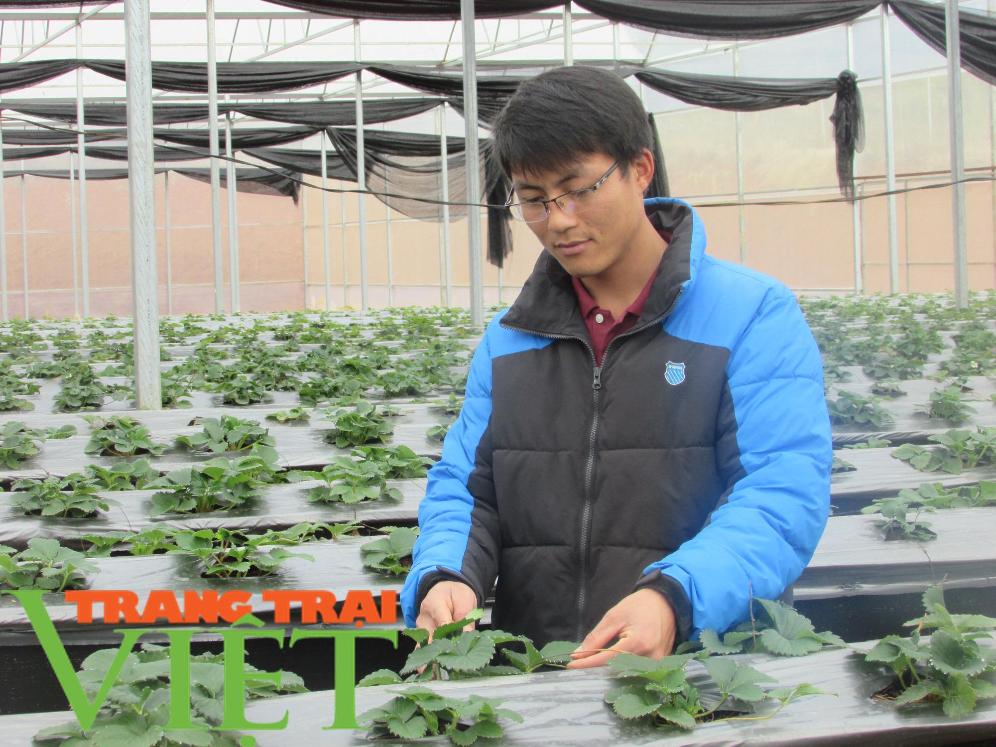 Mộc Châu ứng dụng công nghệ cao vào sản xuất nông nghiệp - Ảnh 2.