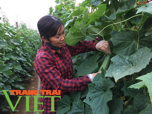 Mộc Châu ứng dụng công nghệ cao vào sản xuất nông nghiệp - Ảnh 6.