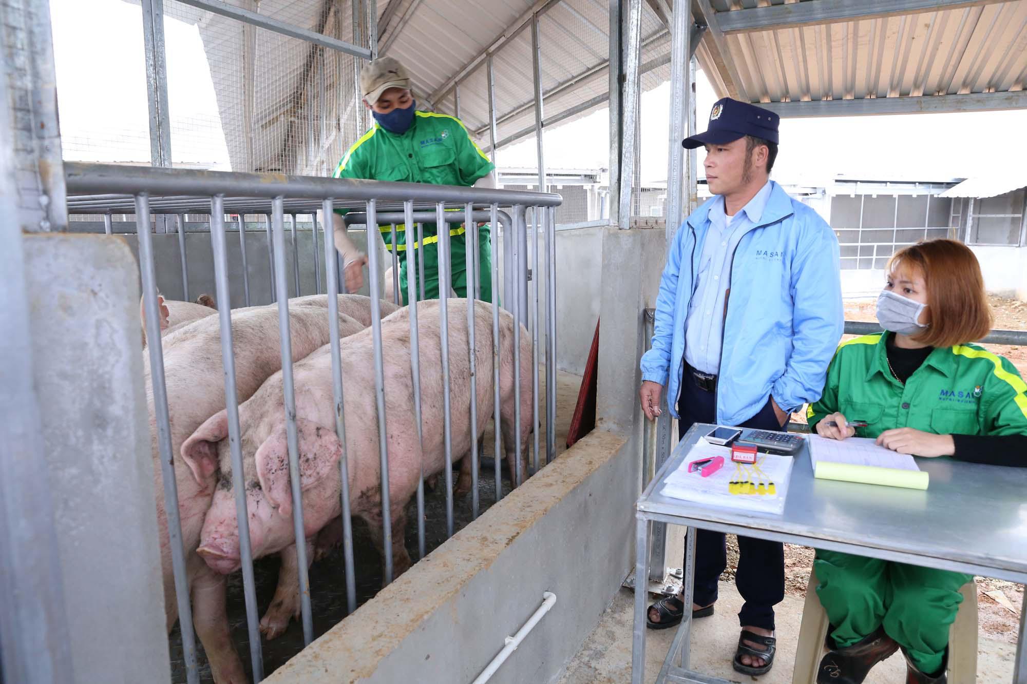 """Giảm giá thịt lợn: """"Ông lớn"""" cần bắt tay, cắt bớt khâu trung gian - Ảnh 4."""