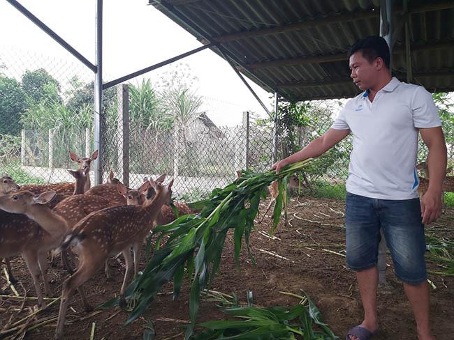 Kỹ sư bỏ lương cao về nuôi con đặc sản cưa sừng làm thuốc bổ - Ảnh 2.