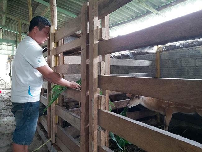 Kỹ sư bỏ lương cao về nuôi con đặc sản cưa sừng làm thuốc bổ - Ảnh 5.