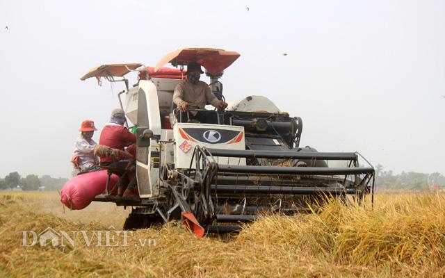Sau đề xuất tiếp tục xuất khẩu gạo: Thị trường lúa gạo lại sôi động - Ảnh 1.
